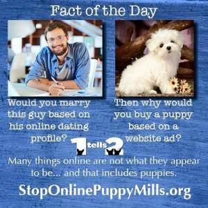 online dating & puppies