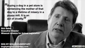 pet shop = misery